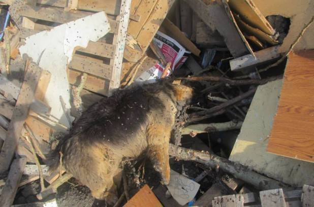 petition 183 guzoo animal farm in three hills ab stop the