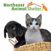 Northeast Animal Shelter