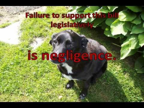 Oneida County Service Dog Laws