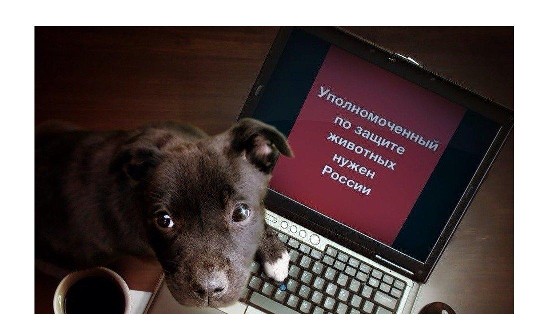 Просим Вас ввести должность Уполномоченного по защите животных!