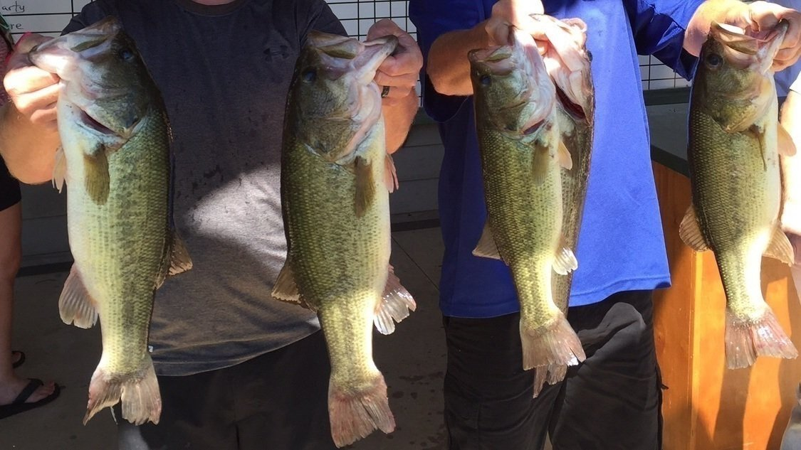 Petition arkansas game and fish commission funds and for Arkansas game and fish license