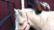 Urge Congress to Pass Anti-Horse Slaughter Bill