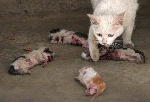 おばあさんが保護した野良犬11匹に食べられてしま …