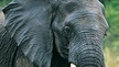 India Removes Elephants from Zoos and Circuses
