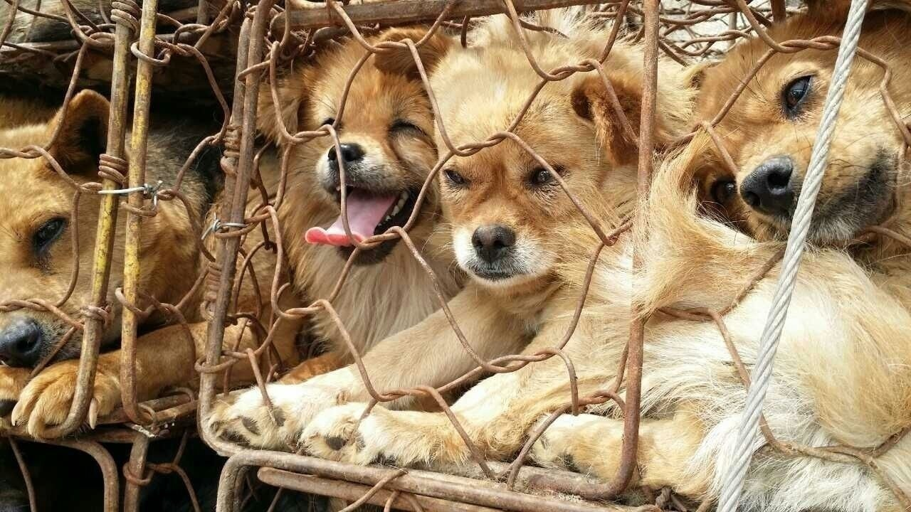 Petition  U00b7 Governor Jerry Brown  Stop The Brutal Dog And