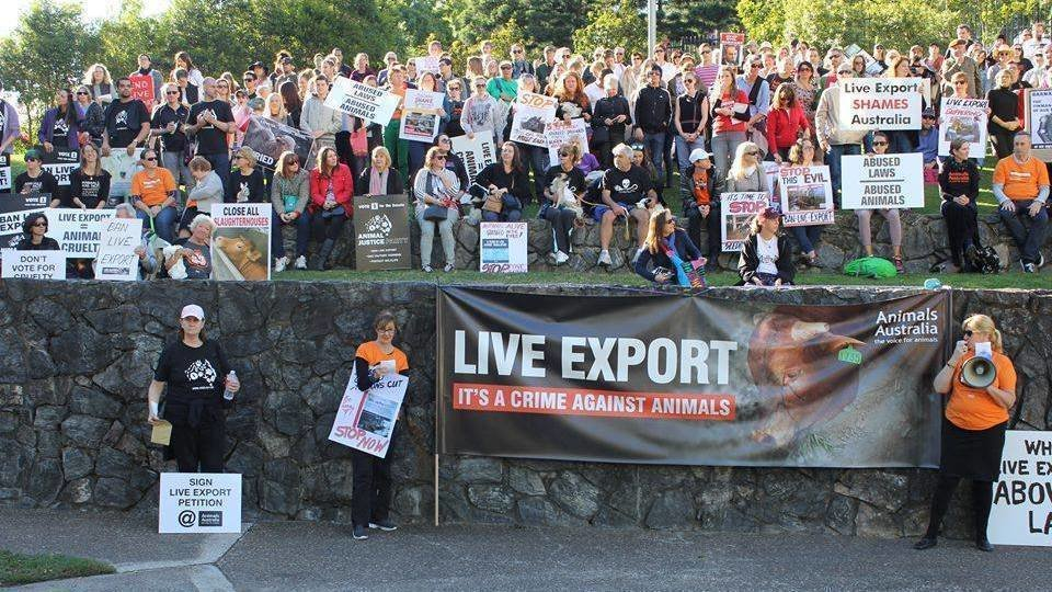 live export The live sheep export trade should be phased out to do otherwise in the face of irrefutable and tragic evidence of systemic failure, negligence, abuse, neglect, and cover-up, now over many.