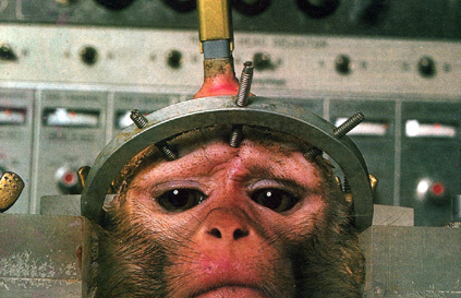 Urge Canada to Ban Chimpanzee Experimentation