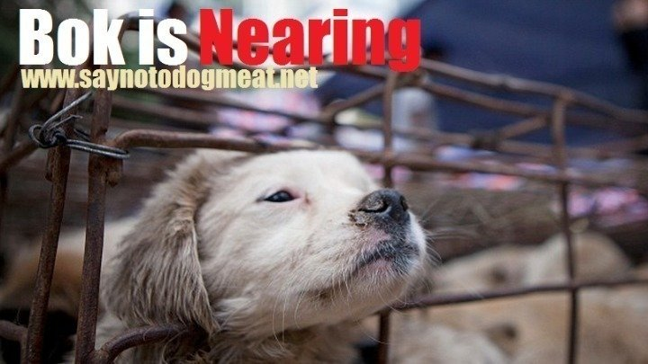 South Korea Stop Eating Dogs