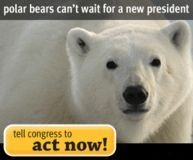 Petition: Urge Congress to Permenantly Protect the Artic Refuge!