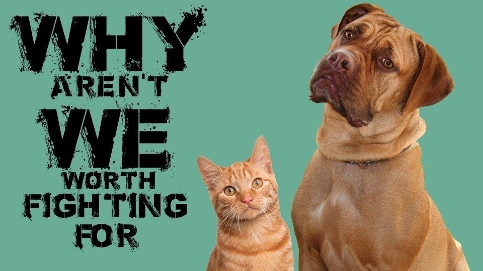 essays for harsher punishment for animal abuse By implementing harsher punishments against so by increasing the severity of animal abuse penalties we can also help stop domestic abuse in an essay by.