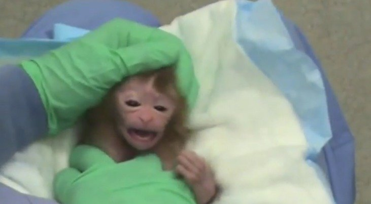 University of Wisconsin: Cancel The Unethical Torture and Killing of Baby Monkeys!