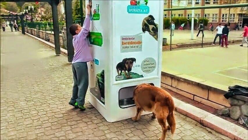 dispensadores de comida para perros: