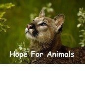 Hope For Animals