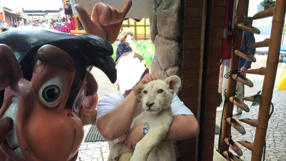 Petition 183 Rescue These Lions Tigers And Other Animals