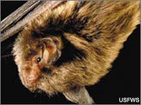 Protect North America's Bats