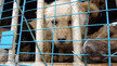 Prevent cruelty to dogs and cats in China.