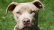 Support Tougher Dogfighting Laws!