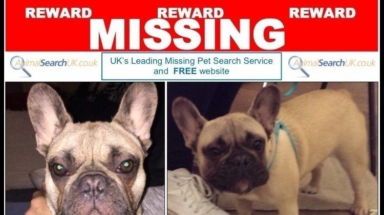 Make Dog Theft A Serious Crime