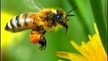 Urge the Department of Agriculture to act now to save bees