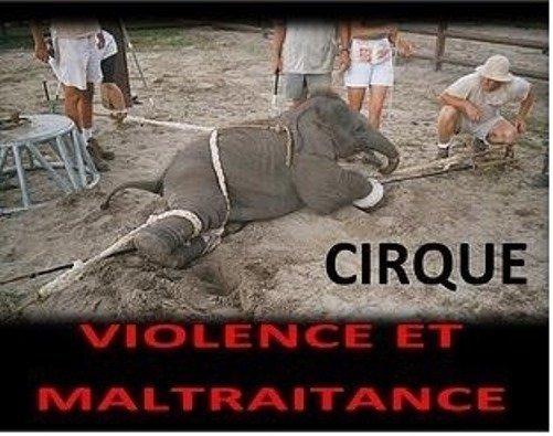 petition  u00b7 claude bartolone  une proposition de loi visant  u00e0 interdire les cirques avec animaux
