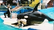 Help Lolita on the 39th Anniversary of Her Captivity!