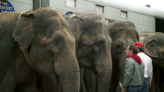 Stop Ringling Bros.' Expansion on Coney Island!