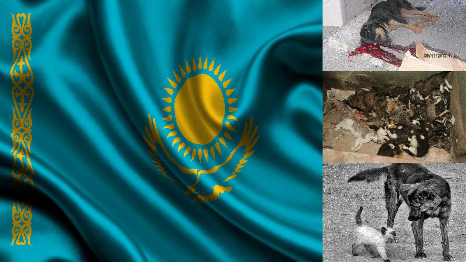 Русские в казахстане 8 фотография