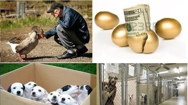 """Dog lovers everywhere: DOG LOVERS EVERYWHERE: 1. JOIN TOGETHER IN NATIONAL BOYCOTT OF ALL DOG BREEDERS UNTIL THE """"EXTENDED PET INDUSTRY""""... ITSELF... PRO-ACTIVELY FOCUSES ON REDUCING SHELTER INTAKE! 2. SEEK SUPPORT FROM POLITICAL ACTION COMMITTEES FOR ANIMALS ('PACs')."""