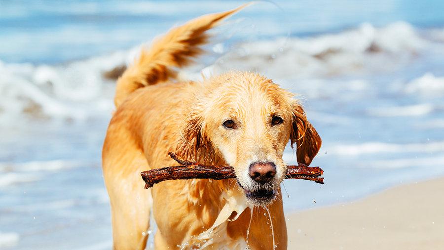 Dog Friendly Beaches Long Beach Ny