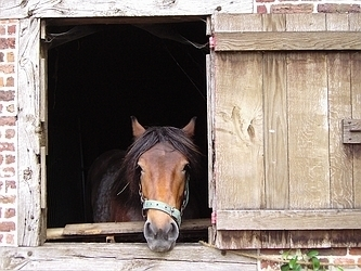 Urge legislators to support the Horse Slaughter Prevention Act