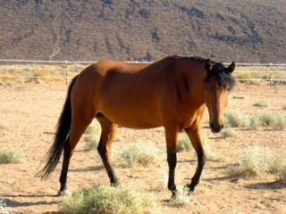 BLM AND WILD HORSE ROUNDUPS
