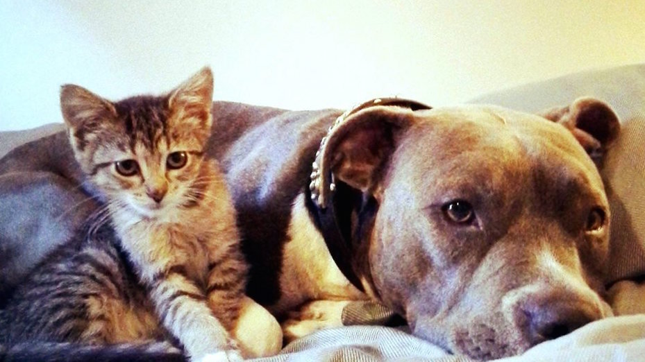 How Many Cats And Dogs Are Killed Each Year