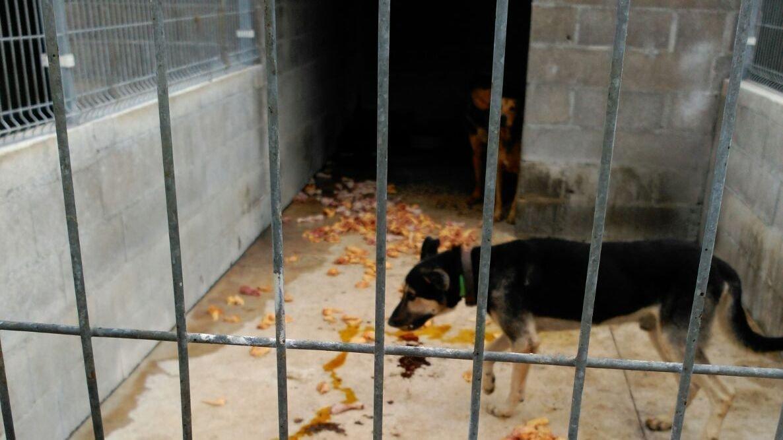 Petition que la red de perreras de la diputaci n - Perrera de vilafranca ...