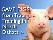 URGENT: Sign Petition to Stop Live Pig Lab Scheduled for April 27