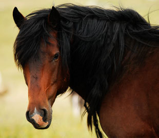 Protect wild horses in Bosnia and Herzegovina