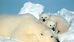 Petition to Save the Polar Bear