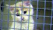 Stop kitten experiments at Cardiff University