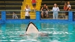 Learn about Lolita, an orca held captive in Miami.