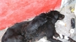 Put and end to the mass killing of street dogs.