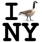 GooseWatch NYC
