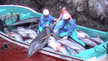 Put an end to the mass slaughter of dolphins!