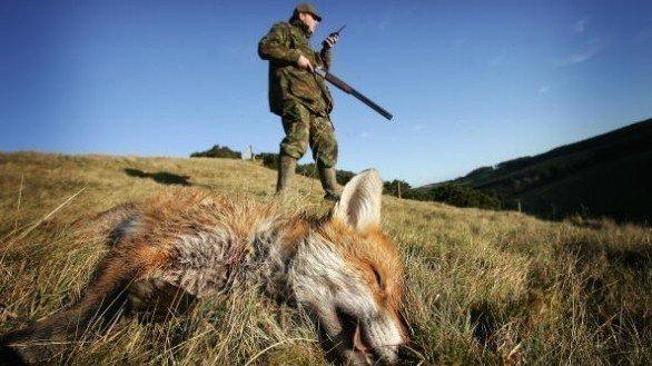 Fermiamo la strage delle volpi e dei cuccioli uccisi in tana nella Provincia di Ancona !!!