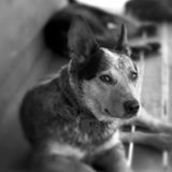 Sentient The Veterinary Institute for Animal Ethics