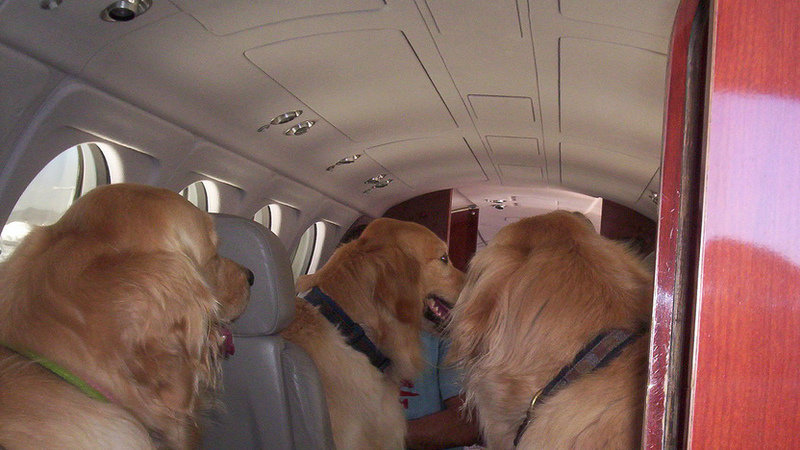 Petition 183 American Airlines Airlines Should Allow Pets