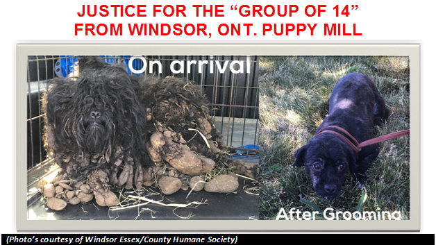 Petition update · PLEASE SIGN ANOTHER PETITION REGARDING A