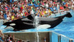 British Airways: Stop selling trips to SeaWorld. End your support for these cruel orca circuses.