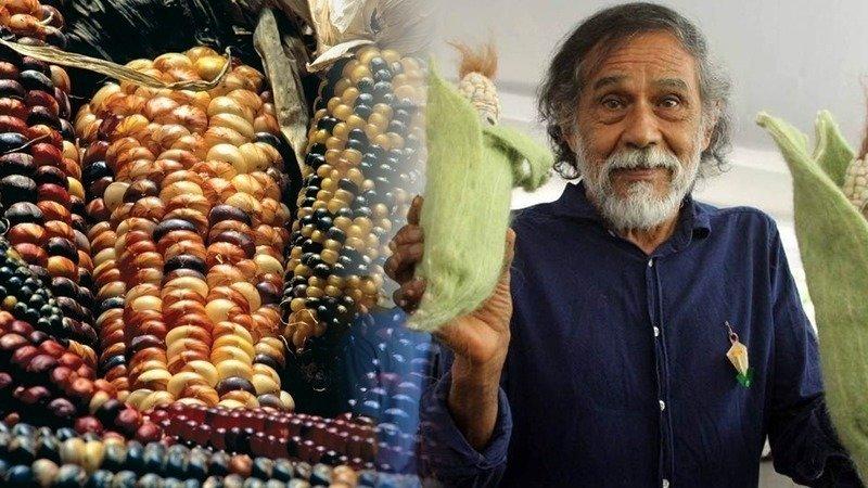 Firma para mantener la suspensión de la siembra de maíz transgénico en México a campo abierto