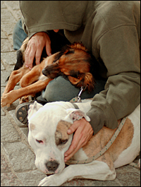 Stop the Pet Ban at Ontario California Homeless Camp