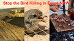 Stop the massive bird slaughter in Egypt!