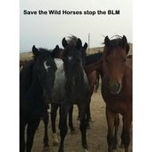 Save the Wild Horses